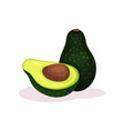 whole and half of ripe avocado green exotic fruit vector image