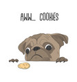 cute pug wanted a cookie funny dog vector image