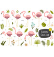 flamingos and plants tropical collection vector image