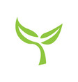 isolated leaves icon vector image vector image