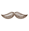 moustache stylish man attribute monochrome sketch vector image vector image