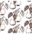 pear vintage background vector image vector image