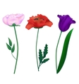 Set realistic flowers vector image