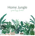 tropical home plants in pots seamless border vector image vector image