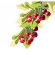 Ripe Red Cherry fruits vector image vector image