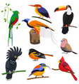 set flat cartoon tropical exotic birds vector image vector image
