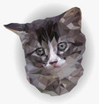 portrait gray and white kitten poly art vector image