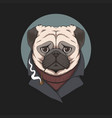 pug dog smoke pipe vector image vector image