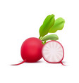 realistic 3d detailed whole radishes and half vector image vector image