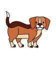 beagle dog on white background vector image vector image