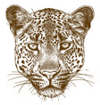 engraving leopard face vector image