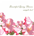Pink flowers bouquet card isolated vector image vector image