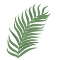 single tropical palm leaf hand drawn vector image