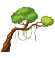 a tree branch on white background vector image vector image