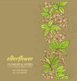 elderflower background vector image vector image