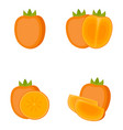 persimmon whole fruit half slice vector image
