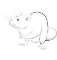 rat sketch vector image vector image