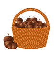 wicker basket acorn harvest natural vector image vector image