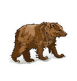 brown bear on a white backgroun vector image