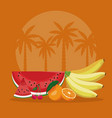 summer fruits in beach vector image vector image