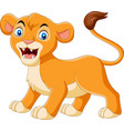 cartoon balioness roaring on white background vector image vector image