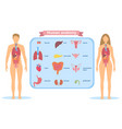 detailed visual human anatomy vector image