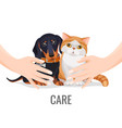 human hands take care about cute pets dog and cat vector image vector image