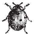 seven spotted ladybug vintage vector image vector image