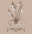 Snowdrops white bow vector image vector image