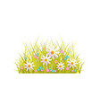 spring grass and flowers easter decoration element vector image