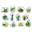 cacti succulents geometric florariums set vector image vector image