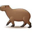 capybara isolated on white backgro vector image vector image