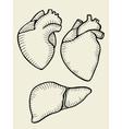 A set of human hearts vector image vector image
