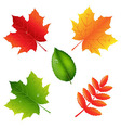 Collection Of Leaves vector image