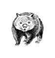 hand drawn wombat vector image vector image
