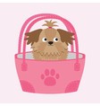 Little glamour tan Shih Tzu dog in the bag vector image vector image