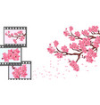sakura curved branches of a cherry tree with vector image vector image
