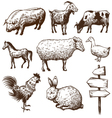 set farm animals isolated on a white background vector image