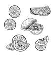 hand drawn set of lemon sketch vector image vector image