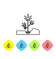 grey line planting marijuana or cannabis plant in vector image vector image