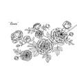 rose flower and leaf hand drawn botanical vector image vector image