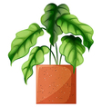 A leafy green ornamental plant vector image vector image