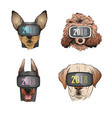dog wearing sunglasses year of the 2018 vector image