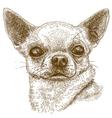 engraving chihuahua vector image