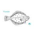 flounder hand-drawn vector image
