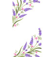 elegant card with lavender flowers vector image