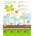 Gardening work farming infographic Pear Graphic vector image