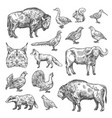 isolated wild animals and birds vector image vector image