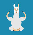 lama alpaca yoga animal yogi isolated relaxation vector image