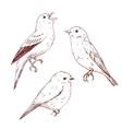 Nice hand drawn birds vector image vector image